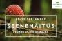Seenenäitus Loodusmaja õuealal 08-12.09.2020